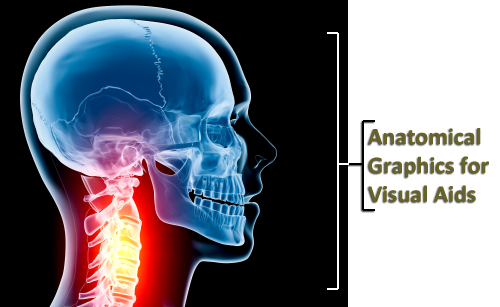 Memphis Legal Video - Anatomical Graphics for Visual Aids
